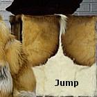 jump_thumb.jpg