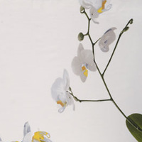 Orchidea is bedding printed with Orchids by Signoria Firenze.